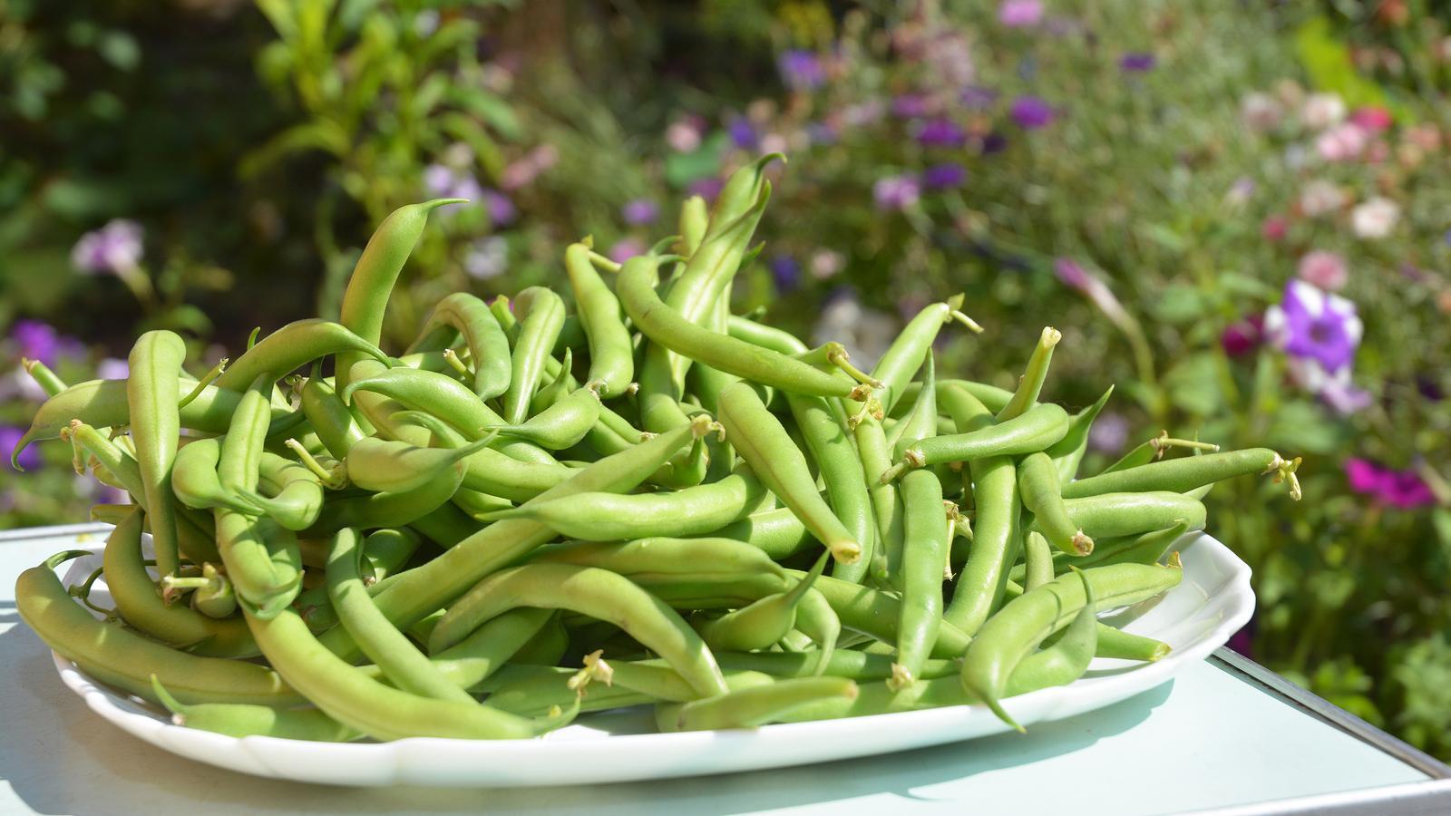 5+1 argumentů ve prospěch zelené fazolky: proč bychom  ji měli konzumovat častěji