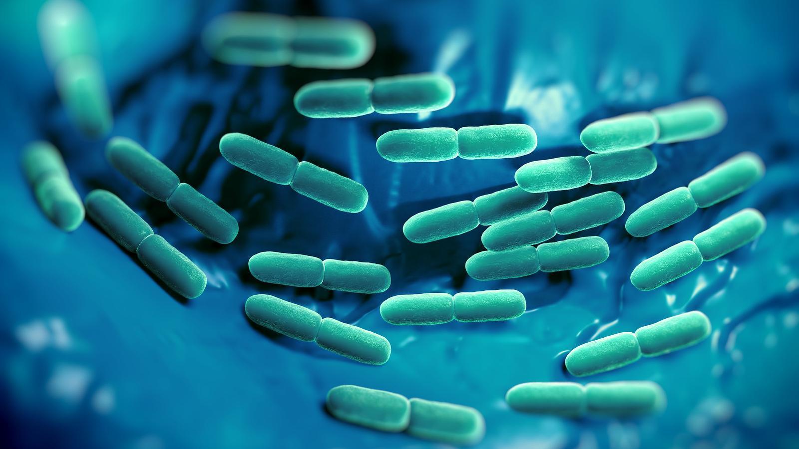 """Képtalálat a következőre: """"baktériumok emésztés"""""""
