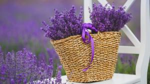 Lavendel-Ätherisches Öl | Bei welchen Gesundheitsproblemen kann es angewendet werden?