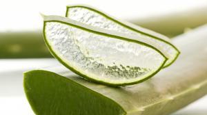 Aloe vera: külsőleg és belsőleg is gyógyír