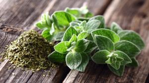 Oregano: aromatická léčivá rostlina