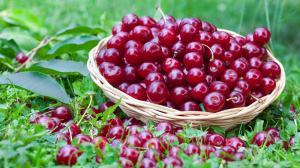 Wiśnie: chronią serce i pobudzają trawienie