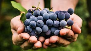 Uva: il dolce regalo dell'autunno