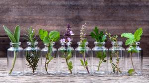Léčivé rostliny proti nachlazení, bolesti  v krku