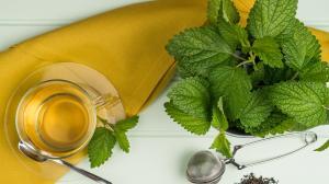Pomůže meduňka | Uklidňuje a léčí