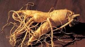 Ginseng, la « racine d'homme » protecteur santé
