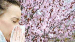 ambrosie allergie