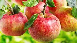 La mela rossa delle tentazioni e della salute