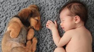 Alvás fontossága az emlékek elraktározása és rendszerezése érdekében
