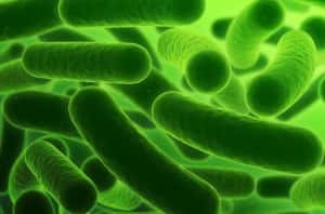 Cum putem sa ajutam inmultirea bacteriilor benefice in organism?