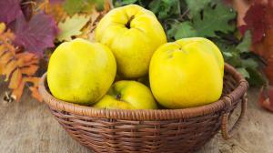 Mela cotogna: una panacea acidula