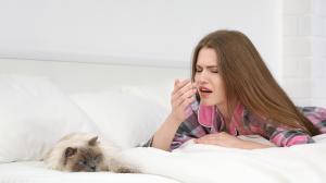 Hogyan szabaduljunk meg a macskaszőr-allergiától?