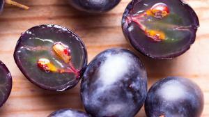 Resveratrol: antioxidant, poklad v hrozne