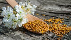 Pyl: superpotravina od včel