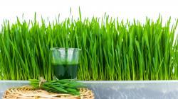Jus d'herbe de blé : pas un produit miracle, mais miraculeux