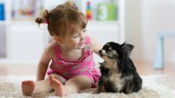Parazity u detí: môže mať od domáceho zvieratka
